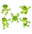 collection of the beautiful green frog vector image vector image