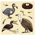 extinct species birds griffon vultures vector image