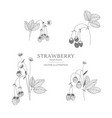 hand drawn strawberry set vector image vector image