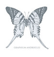 set hand drawn pastel giant swordtail vector image vector image