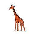 giraffe cartoon animal vector image