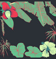 hand drawn of tropical plants banana leaves and vector image vector image