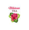 tea flyer or leaflet card with hawaiian hibiscus vector image