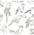 Bird collection pattern vector image