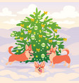 funny corgi dogs playing on snow near decorated vector image vector image
