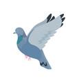 gray pigeon flat fauna vector image vector image