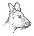 hand drawn musk deer head sketch vector image vector image