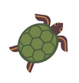 sea turtle tortoise or terrapin isolated on white vector image vector image