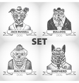 Hipster animals set dog with glasses and bow ties vector image