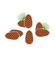 pine nut vector image