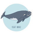 right whale isolated on blue vector image vector image
