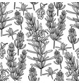 graphic rosemary set vector image vector image