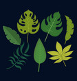 set of tropical and exotic leaves design vector image