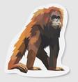 sticker orang utan vector image