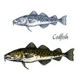 cod fish isolated sketch icon vector image vector image