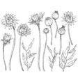 collection hand drawn flowers and brunchs vector image