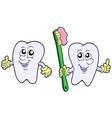 pair of cartoon teeth vector image