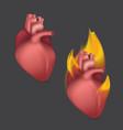 burning anatomical heart realistic human organ of vector image vector image