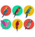 exotic parrot tropical bird various parrots vector image vector image