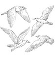 set hand drawn seagulls black and white vector image
