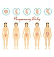 Changes in a womans body in pregnancy vector image