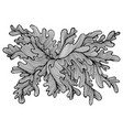 decorative seaweed drawing coloring page elegant vector image vector image