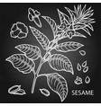 graphic sesame flowers vector image