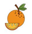 orange sliced fruit vector image vector image