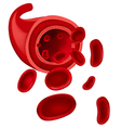 Red blood cells vector image vector image