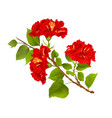 red hibiscus branch tropical flowers on a white vector image vector image