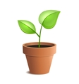 Young Green Plant in Pot Isolated on the White vector image vector image