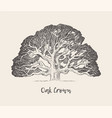 old oak tree hand drawn engraved style vector image vector image