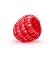 realistic fresh raspberry red fruit a vector image vector image