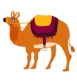 Animal camel with saddle vector image vector image
