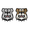 bulldog head mascot in cartoon style vector image vector image
