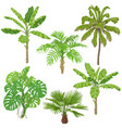 tropical plants set vector image vector image