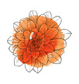 drawing flower vector image vector image
