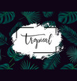 summer tropical background with exotic palm vector image vector image