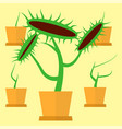 carnivorous green plant vector image