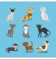 Cartoon domestic cat set vector image vector image