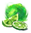 drawing lime with a slice vector image vector image