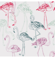 flamingo drawing vector image vector image