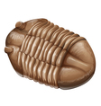 Trilobite fossil vector image vector image