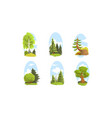 beautiful deciduous and coniferous green trees vector image