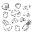 drawing of various fruits vector image vector image
