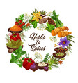 herbs and spices seasonings and condiments vector image vector image