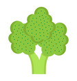 broccoli flat icon vegetable and diet vector image