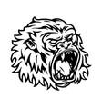aggressive gorilla head tattoo vintage concept vector image vector image