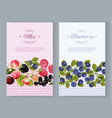 Berry vertical banners vector image vector image