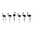 black flamingo silhouettes isolated on vector image vector image